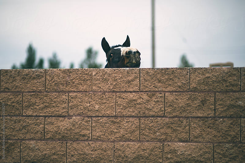 A horse peeks his head over a brick wall by Rachel Bellinsky for Stocksy United