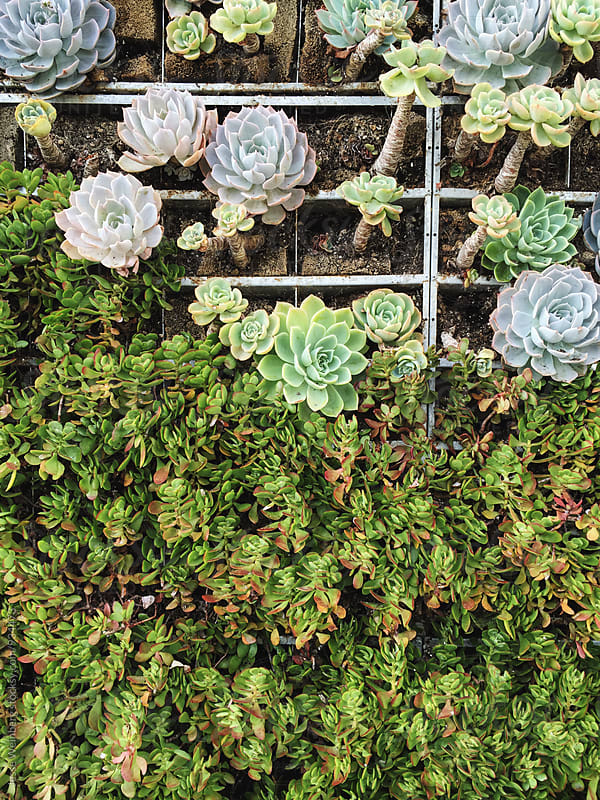 Succulent Garden  by Jesse Weinberg for Stocksy United
