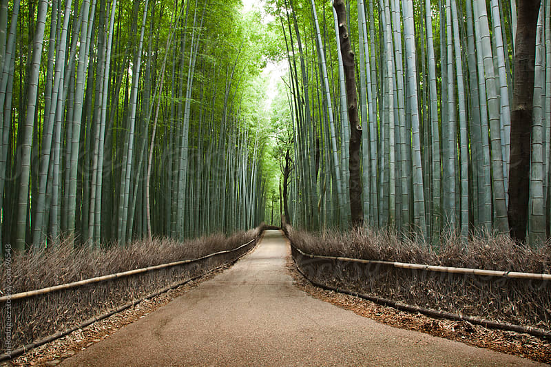Arashiyama forest, Kyoto, Japan. by Jon Rodriguez for Stocksy United