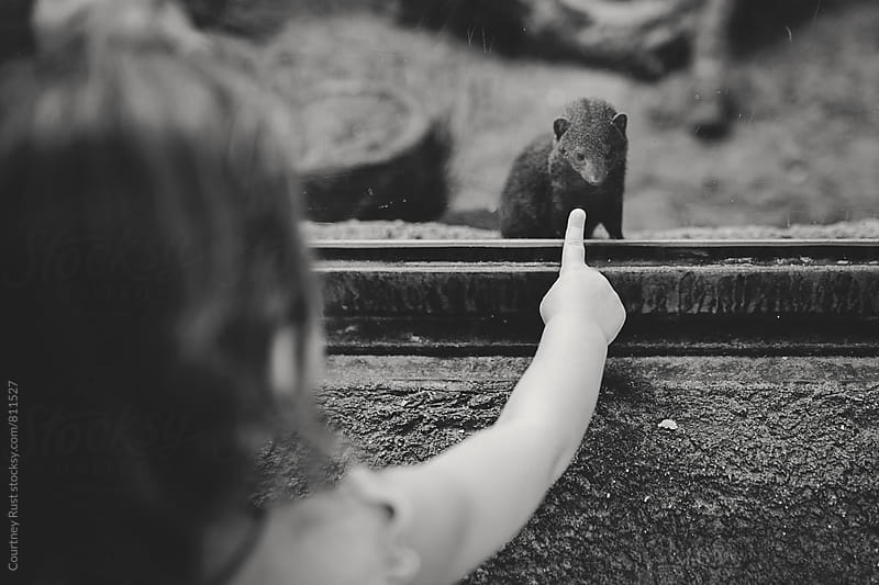 hello Mr. Mongoose by Courtney Rust for Stocksy United