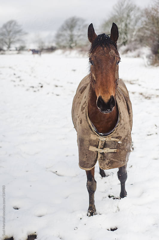 Horse standing in snow by Suzi Marshall for Stocksy United