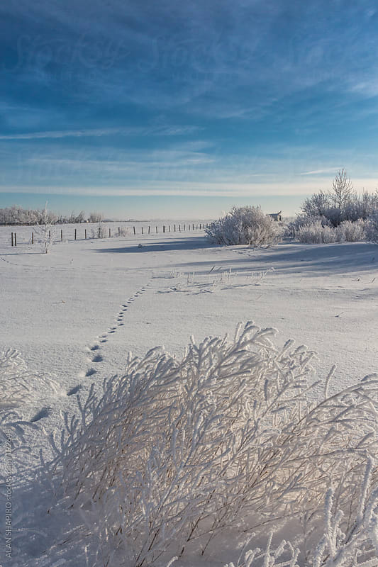 snow on the prairie by ALAN SHAPIRO for Stocksy United