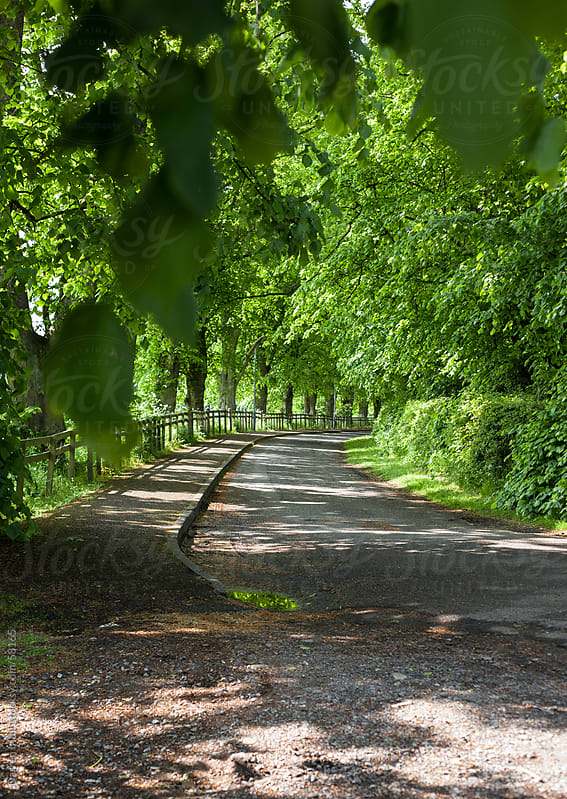 Leafy tree lined street. by Darren Muir for Stocksy United