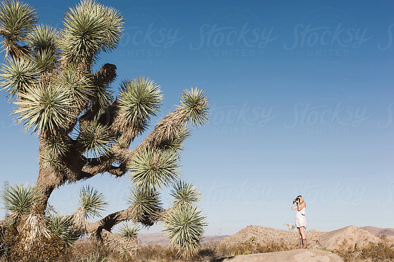Attractive woman takes picture of Joshua Tree in desert. by Holly Clark for Stocksy United
