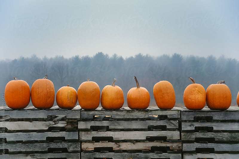 Wall of Pumpkins by Raymond Forbes LLC for Stocksy United
