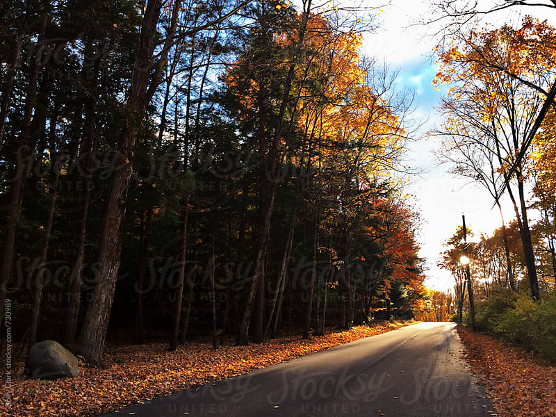 Fall leaves surround country road by Holly Clark for Stocksy United