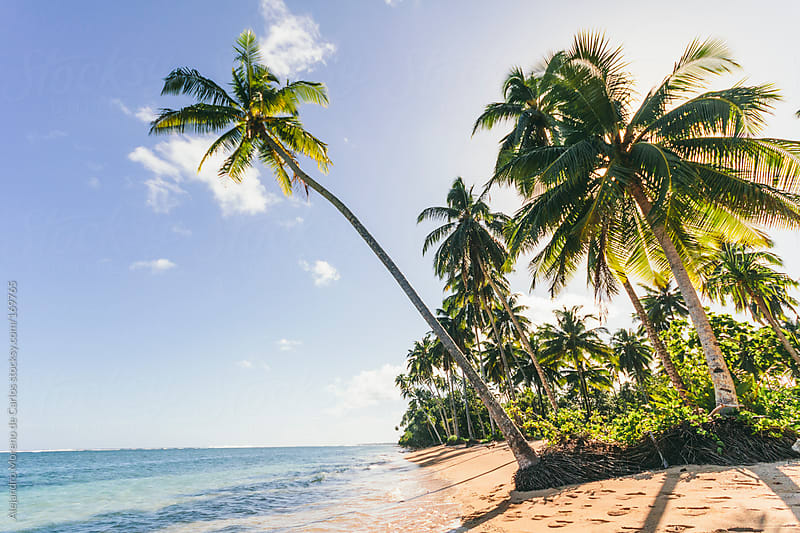 Palm trees and beach in tropical island by Alejandro Moreno de Carlos for Stocksy United