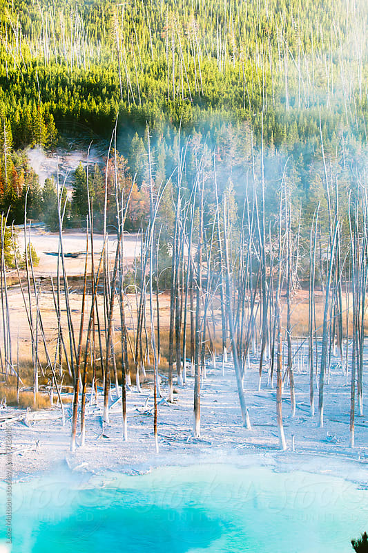Dead Pine Trees Near The Edge Of A Bright Blue Hot Spring In Yellowstone National Park by Luke Mattson for Stocksy United