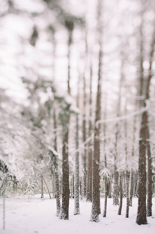 Wintery scene by Alexey Kuzma for Stocksy United