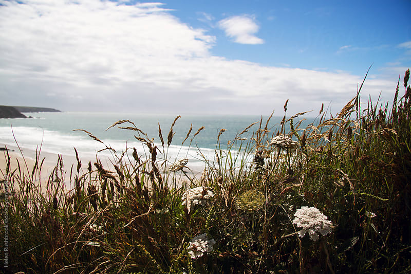 Wildflowers and the Ocean at Marloes Sands, Wales. by Helen Rushbrook for Stocksy United