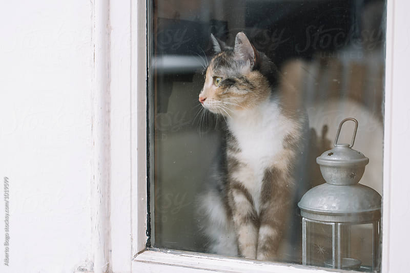 Cat Looking through the Window by Alberto Bogo for Stocksy United