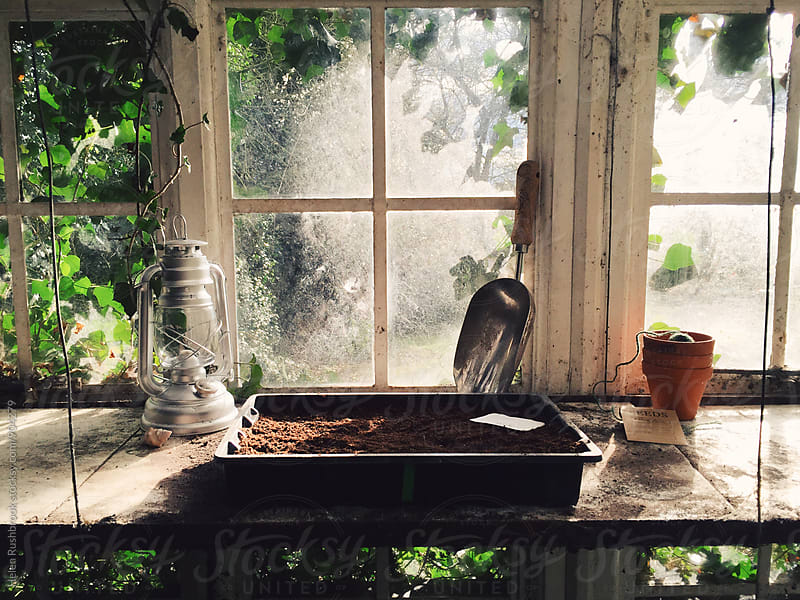 A seed tray ready for sowing seeds in an old greenhouse. by Helen Rushbrook for Stocksy United