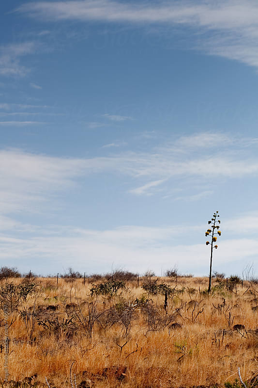 Texas Desert Landscapes by Anjali Pinto for Stocksy United