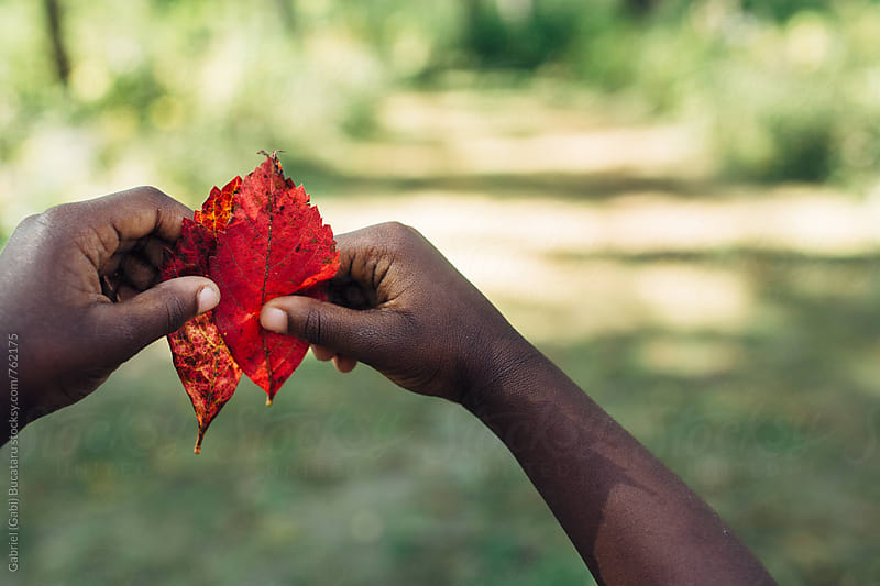 Hands of a black child holding up red leaves by Gabriel (Gabi) Bucataru for Stocksy United