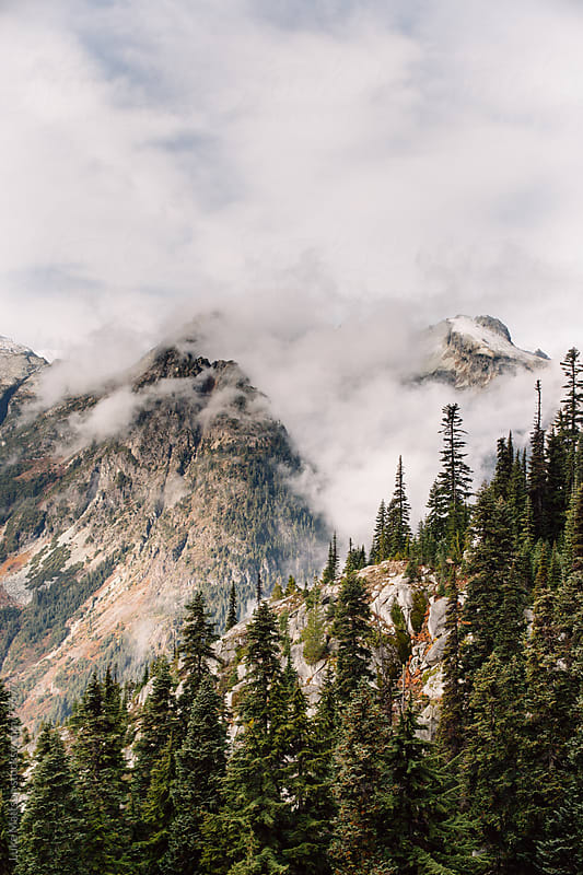 Foggy Mountain Heights And Subalpine Forest by Luke Mattson for Stocksy United