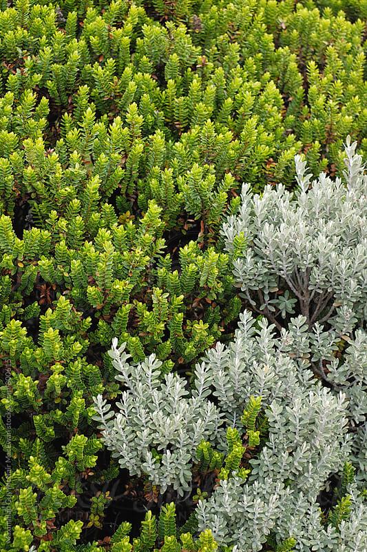 Alpine Plants by Maximilian Guy McNair MacEwan for Stocksy United