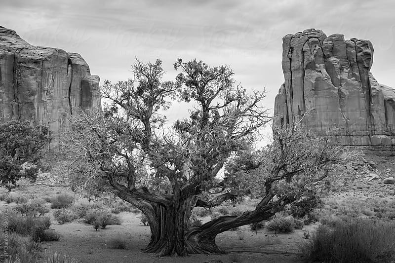 Monument Valley Utah USA in Black and White by JP Danko for Stocksy United