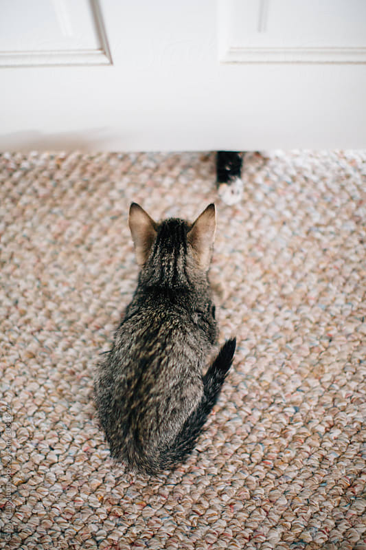 Tabby kitten in front of a door with a paw reaching under from the other side by Carolyn Lagattuta for Stocksy United