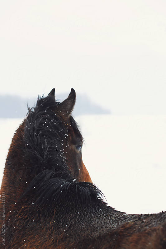 Looking Across The Back Of A Brown Horse Dotted With Snowflakes On A Winter Afternooon by ALICIA BOCK for Stocksy United