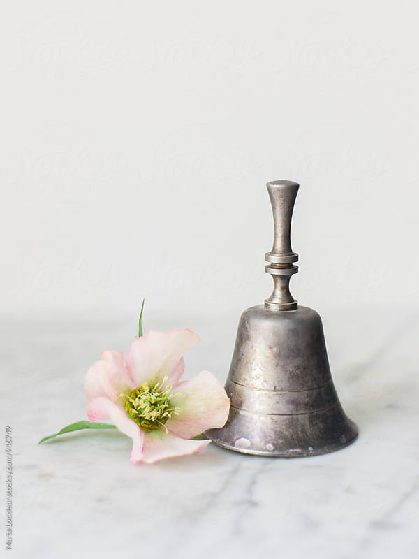 Hellebores and Silver Bell by Marta Locklear for Stocksy United