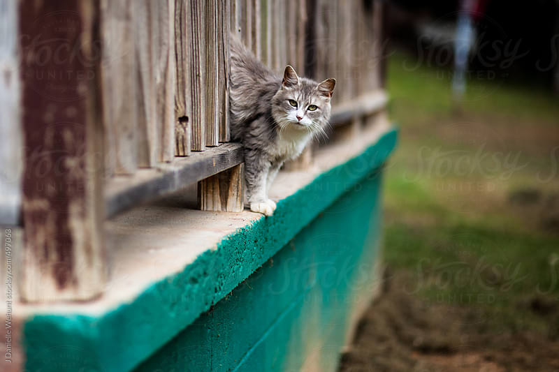 Cat peeking out edge of porch by J Danielle Wehunt for Stocksy United