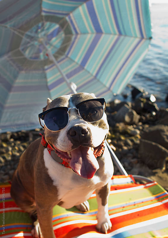 Dog wearing sunglasses at the river by Tana Teel for Stocksy United