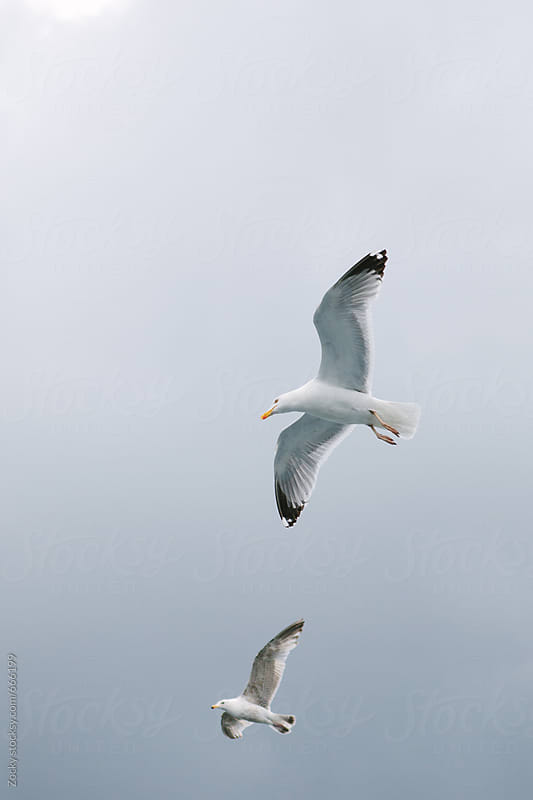 Two Seagulls in Flight... by Zocky for Stocksy United