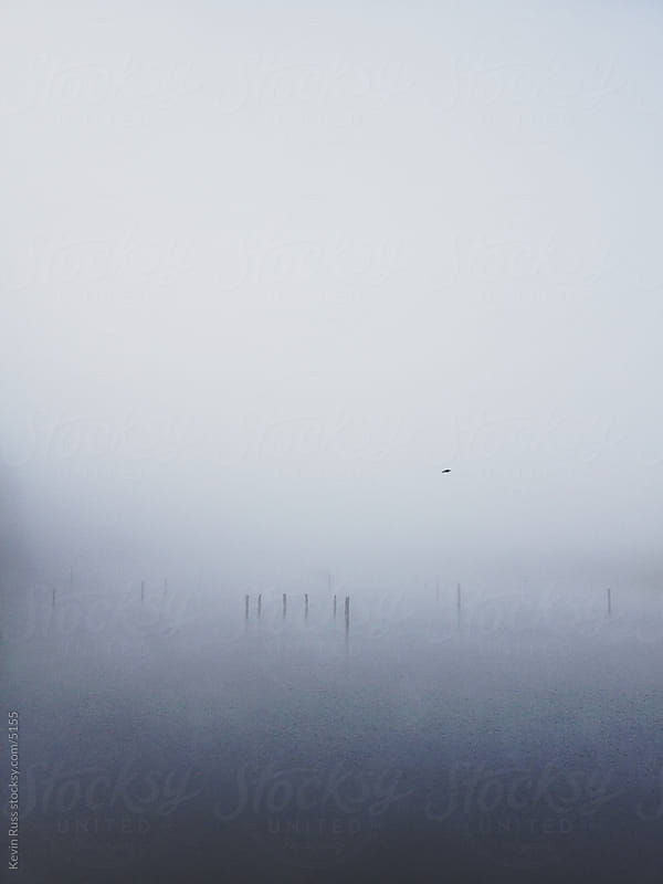 Foggy Millpond by Kevin Russ for Stocksy United