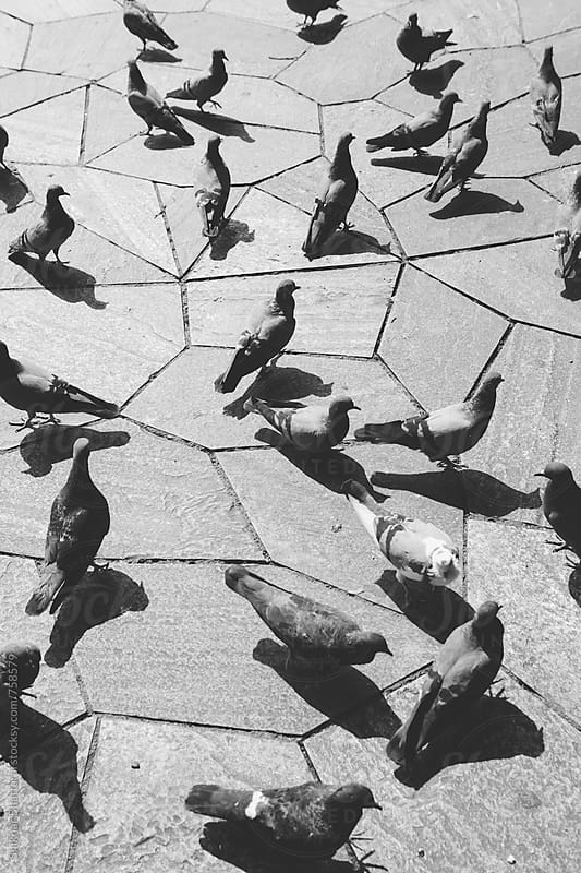 Pigeons facing different directions, shot from above. by Shikhar Bhattarai for Stocksy United