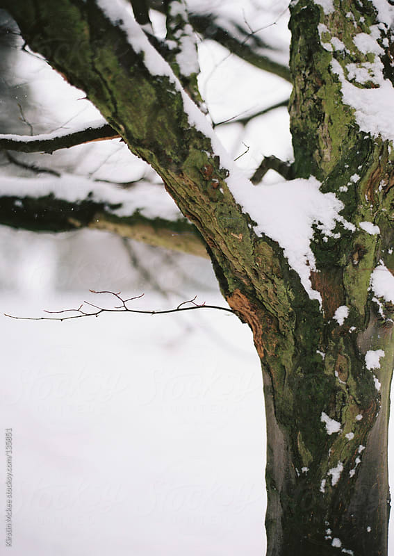 Close up of a tree covered in snow.  by Kirstin Mckee for Stocksy United