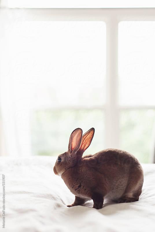 Velveteen bunny by Melanie DeFazio for Stocksy United