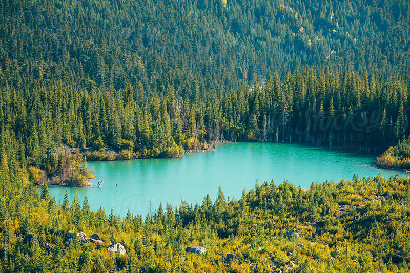 Teal Forest Lake In Mount Rainier National Park by Luke Mattson for Stocksy United