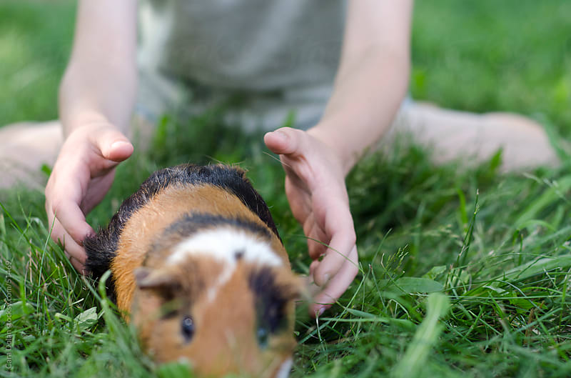 Child reaches out for guinea pig as it walks away by Cara Dolan for Stocksy United