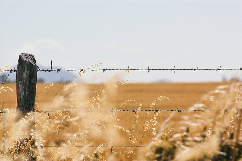 Barbed wire fence by Jacqui Miller for Stocksy United
