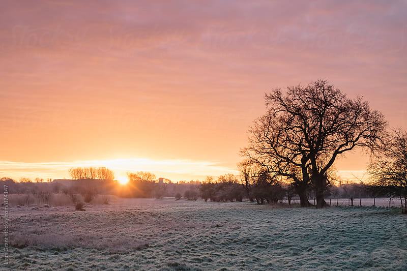 Frost covered field at sunrise. Cressingham, Norfolk, UK. by Liam Grant for Stocksy United