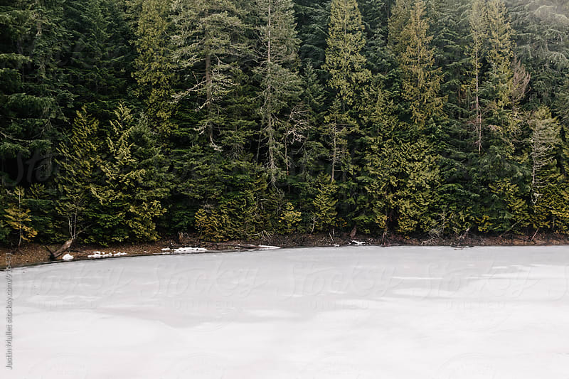 Evergreen trees on shoreline of a frozen lake.  by Justin Mullet for Stocksy United