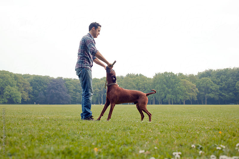 An adult owner playing with a stick with his brown haired dog by Ivo de Bruijn for Stocksy United