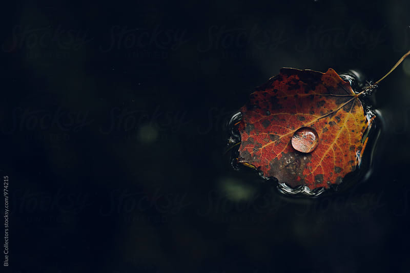 leaf with a drop floating on the dark water  by Blue Collectors for Stocksy United