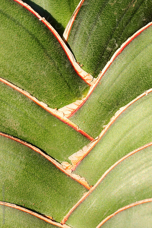 sansevieria plant detail by Marcel for Stocksy United