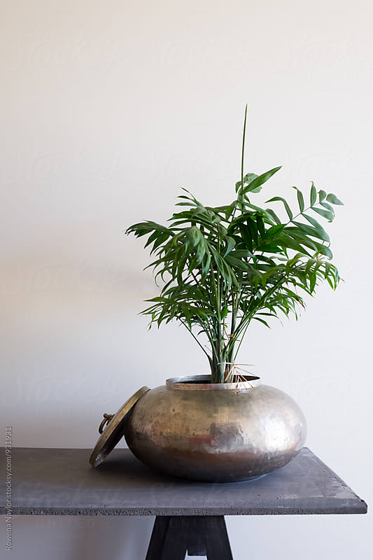 Fern plant in brass planter pot by Rowena Naylor for Stocksy United