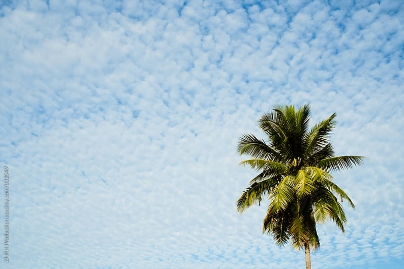 Palm tree by ZHPH Production for Stocksy United