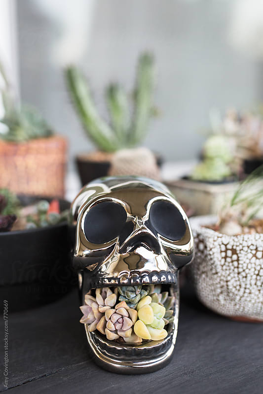 Chrome skull with succulents by Amy Covington for Stocksy United