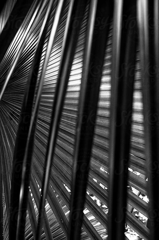 Palm leaves abstract by Marcel for Stocksy United