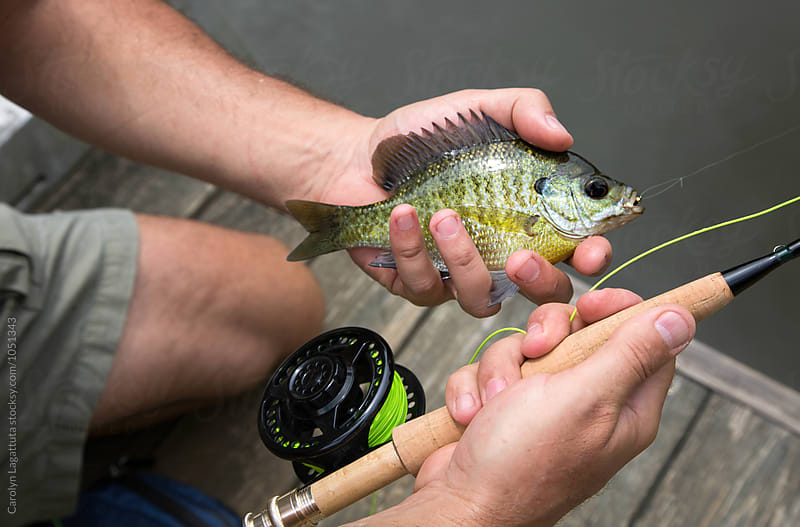 Man holding a blue gill fish caught on a fly rod by Carolyn Lagattuta for Stocksy United