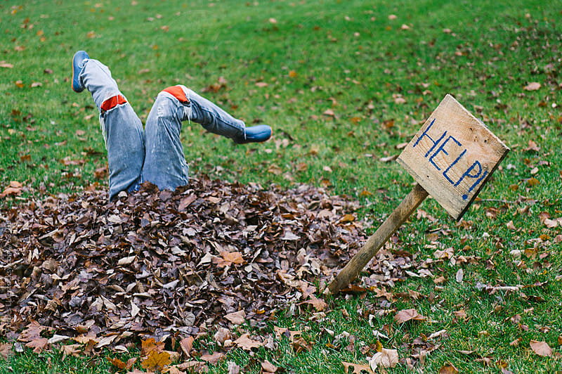 Autumn Lawn Art by Raymond Forbes LLC for Stocksy United