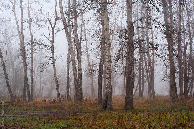 The trunks of the trees in the misty autumn forest. by Svetlana Shchemeleva for Stocksy United