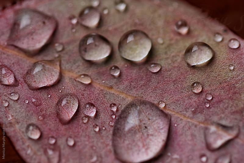 Close up of rain drops on a leaf by Monica Murphy for Stocksy United