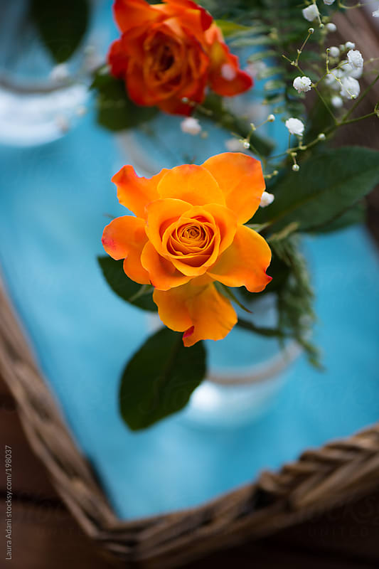 orange rose in a basket by Laura Adani for Stocksy United