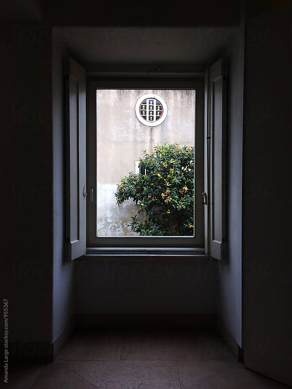 Orange tree seen from inside a building by Amanda Large for Stocksy United