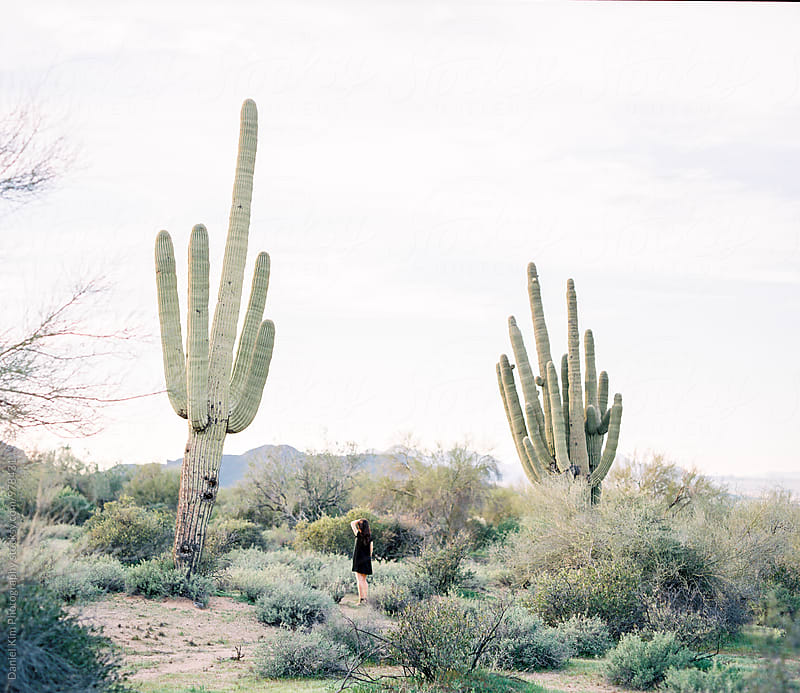 Woman looking up at huge cactus by Daniel Kim Photography for Stocksy United